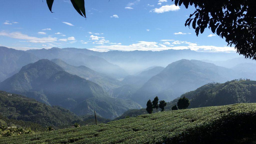 Alishan Tea garden Tearista Sofie